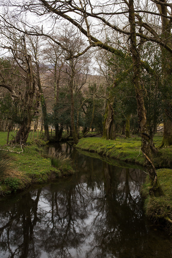 A fairytale forest at Lord Brandons Cottage