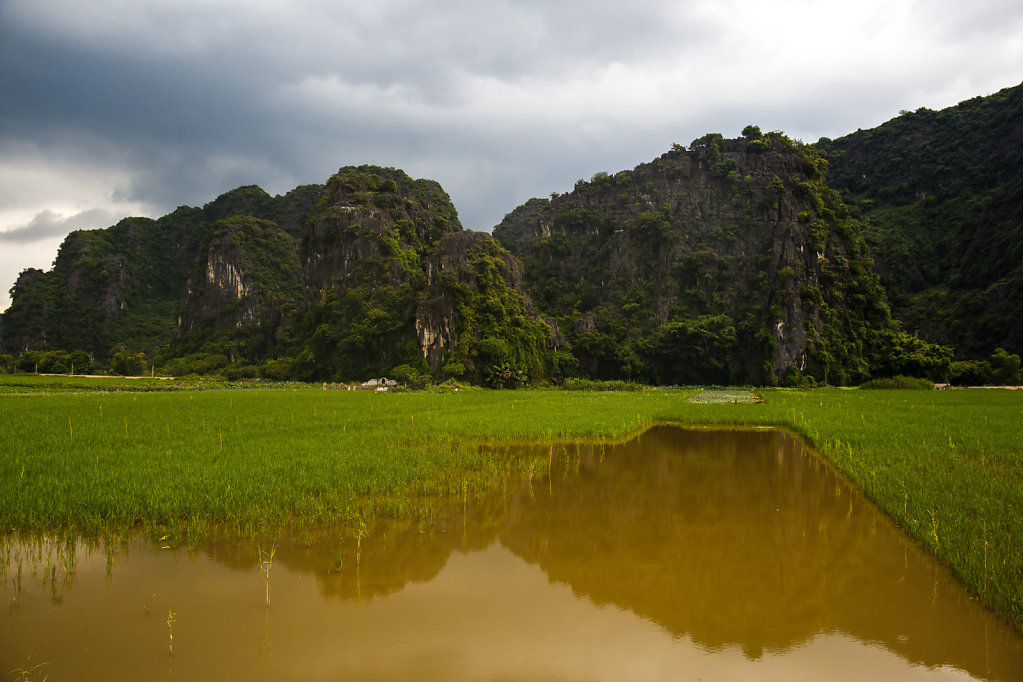 Rice fields in Tam Coc